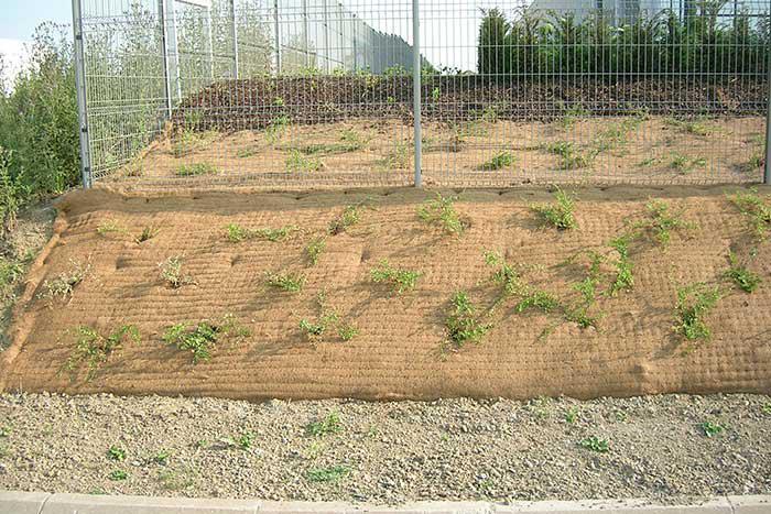 Mulchmat tinklas - naujų augalų apsaugai