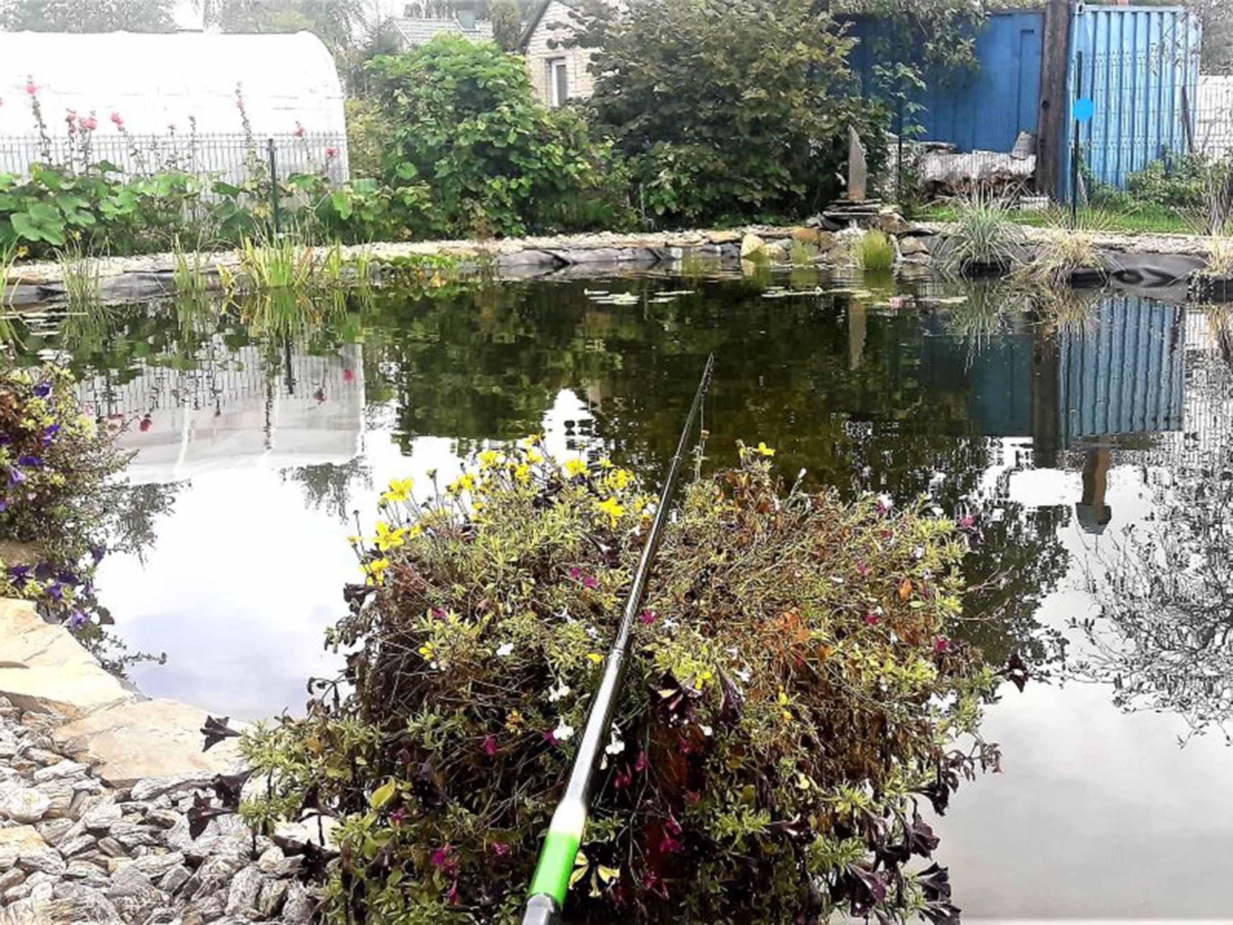 Tvenkinys sode